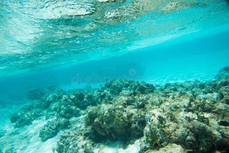 Butterflyfish do Threadfin no recife natural imagens de stock