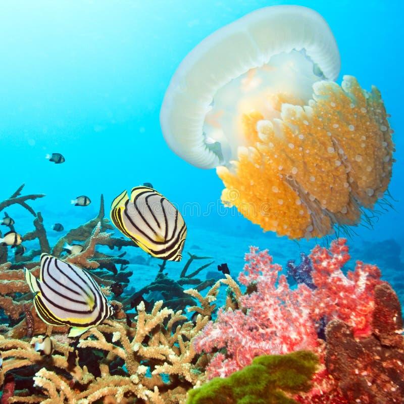 Butterflyfishes y medusas imagenes de archivo