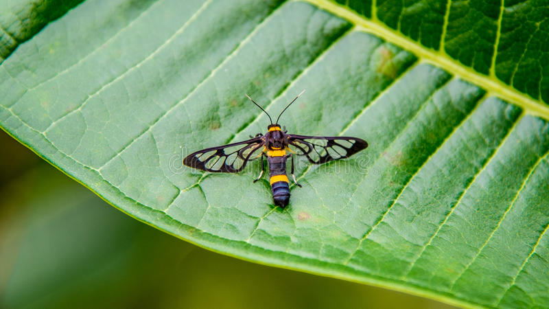 Butterflygrass 免版税库存照片