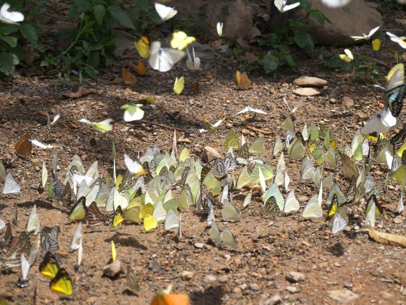 Butterflys royalty-vrije stock foto's