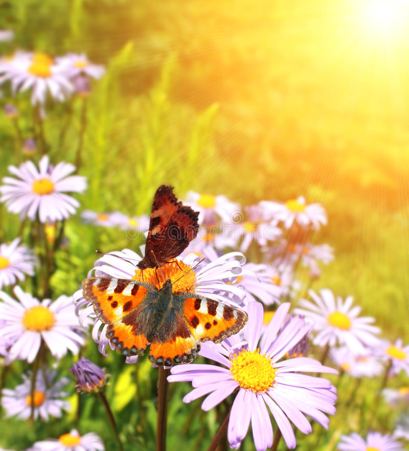 Download Butterflys stock image. Image of flower, nature, insect - 18557183