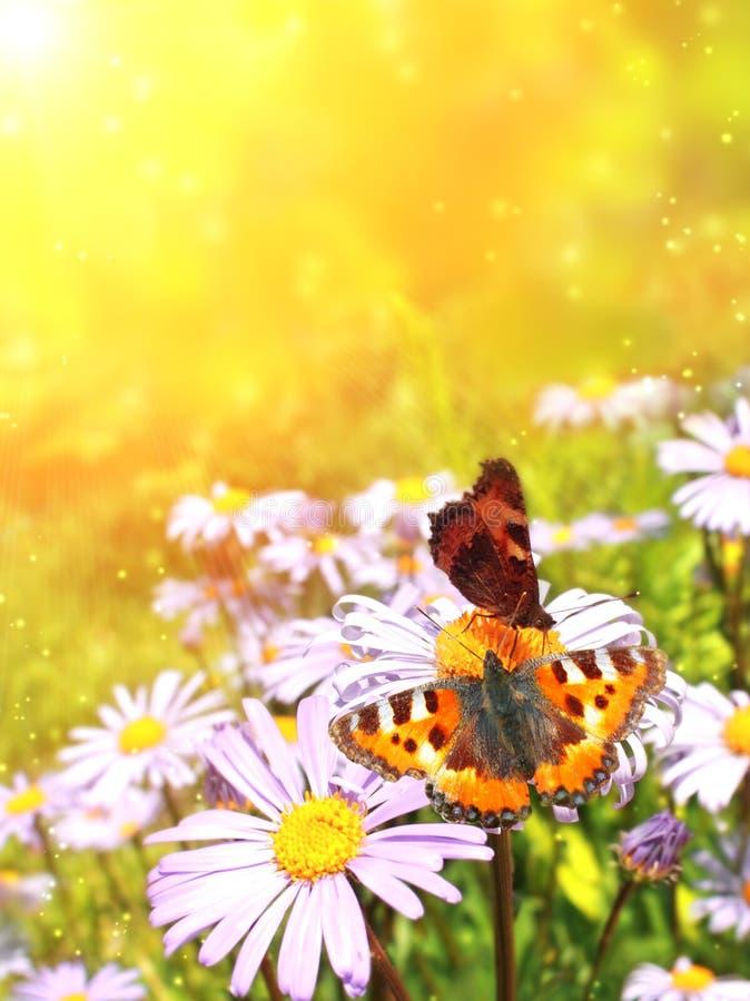 Butterflys imágenes de archivo libres de regalías