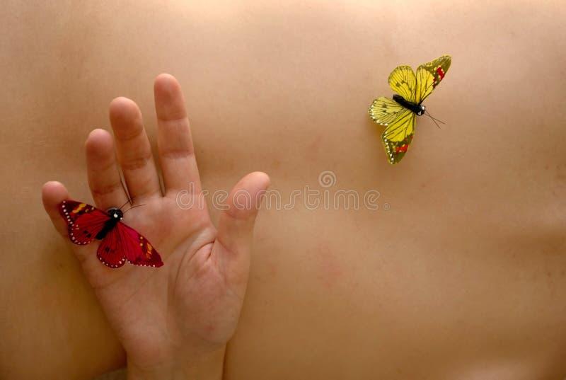 butterflys fotografia royalty free
