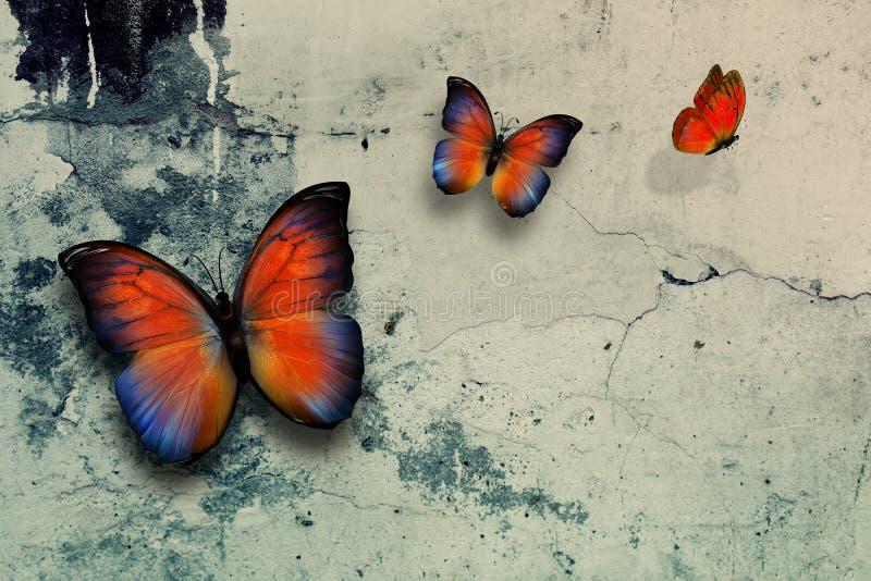 Butterflys fotografia stock libera da diritti