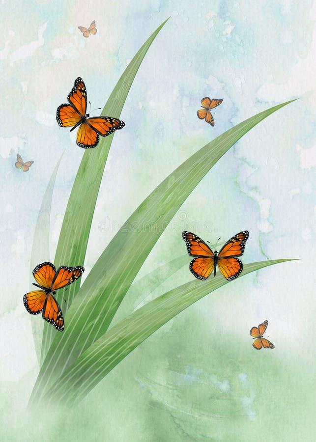 Butterflys photos libres de droits