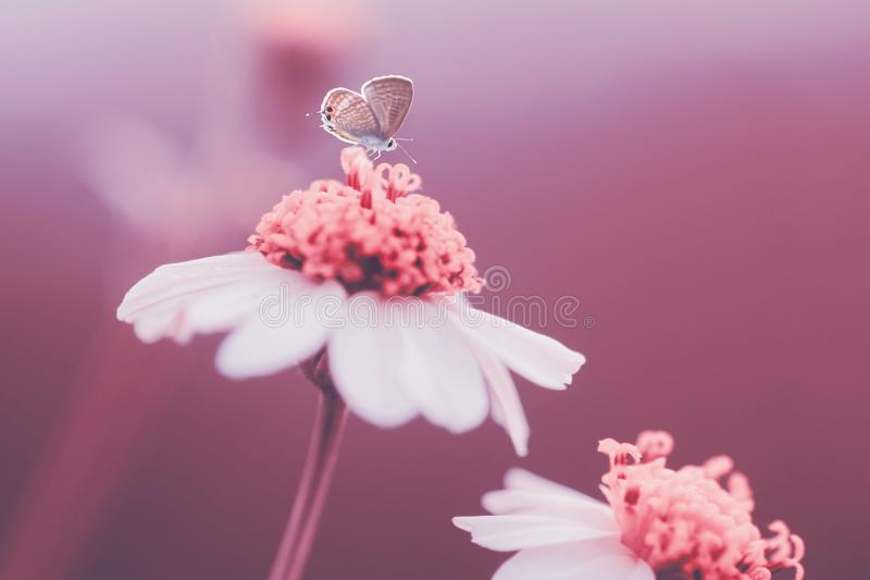 Butterflys, animais, macro, bokeh, inseto, natureza, imagens de stock