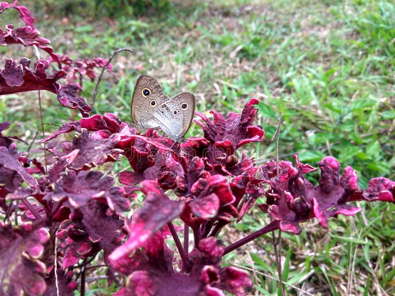 Butterflys asombrosos fotos de archivo libres de regalías