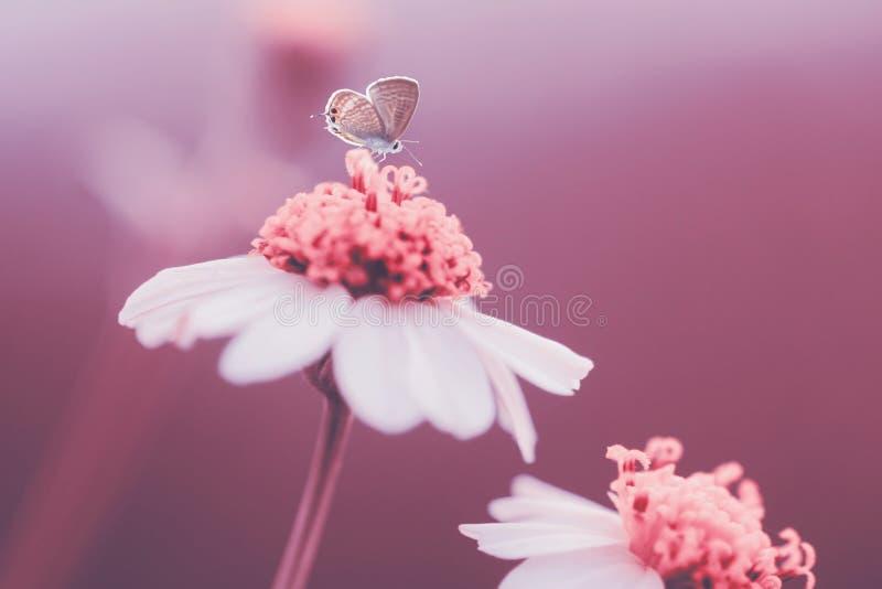 Butterflys djur, makro, bokeh, kryp, natur, arkivbilder