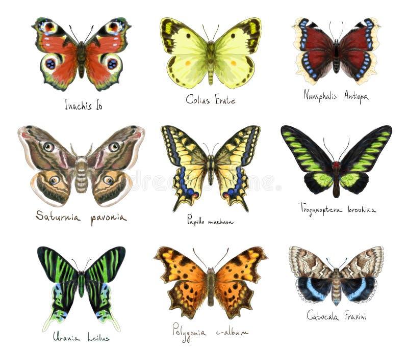 Butterflys Imitación de la acuarela stock de ilustración