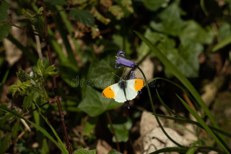 Butterfy die zijn zelf zont royalty-vrije stock foto