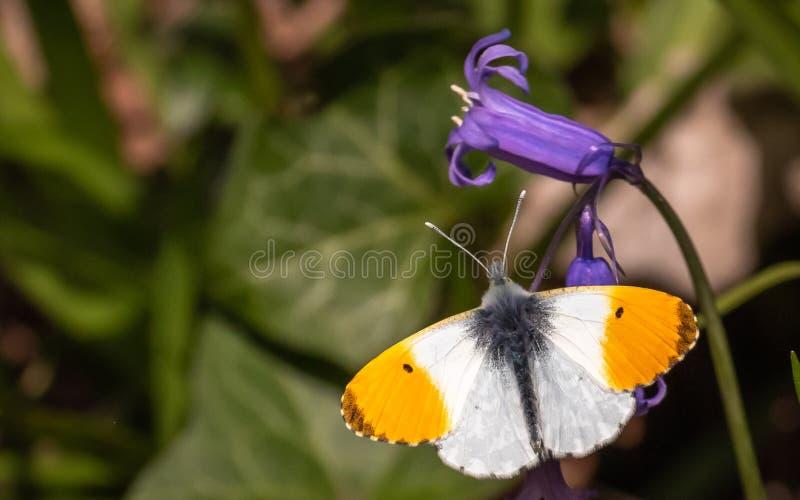 Butterfy die zijn zelf zont royalty-vrije stock fotografie