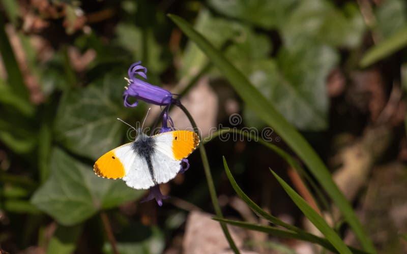 Butterfy die zijn zelf zont royalty-vrije stock afbeeldingen
