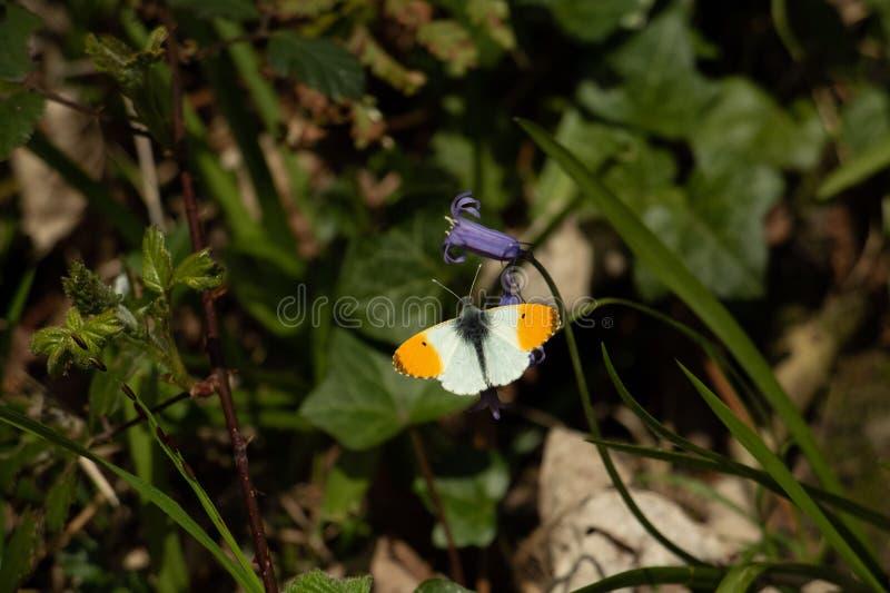 Butterfy som sunning dess själv royaltyfri foto