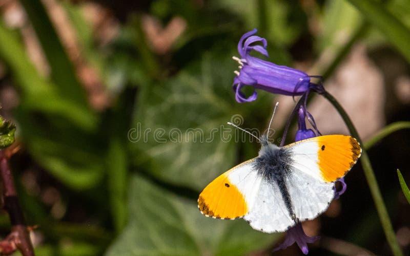 Butterfy som sunning dess själv royaltyfri fotografi