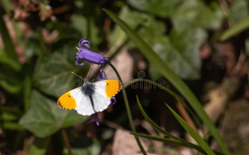 Butterfy sunning its self. royalty free stock images