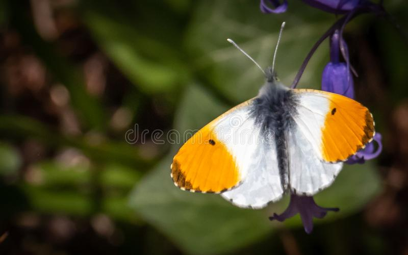 Butterfy sunning swój jaźń zdjęcie stock