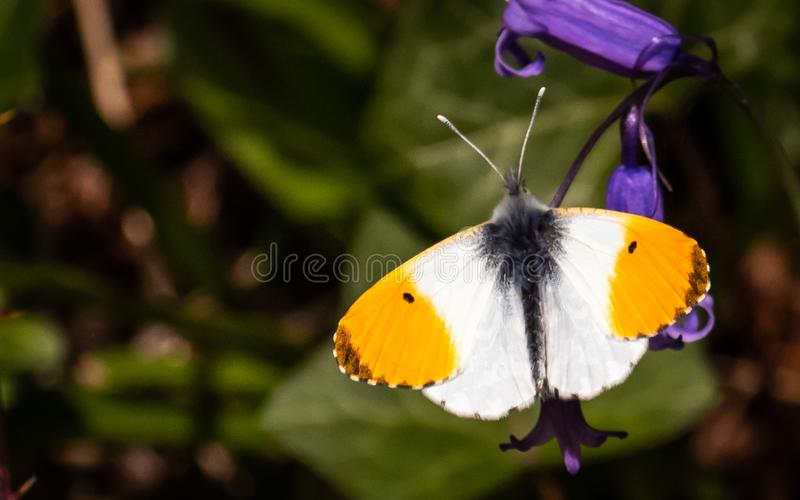 Butterfy sunning swój jaźń zdjęcia royalty free