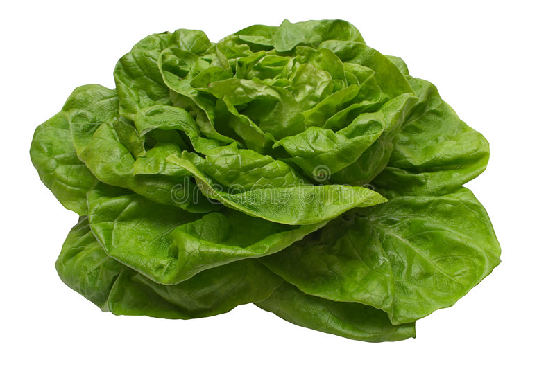 Butterhead Lettuce w/ Path. stock photo