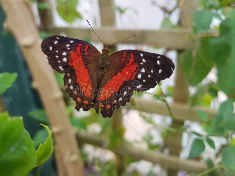Butterly dans un jardin photographie stock