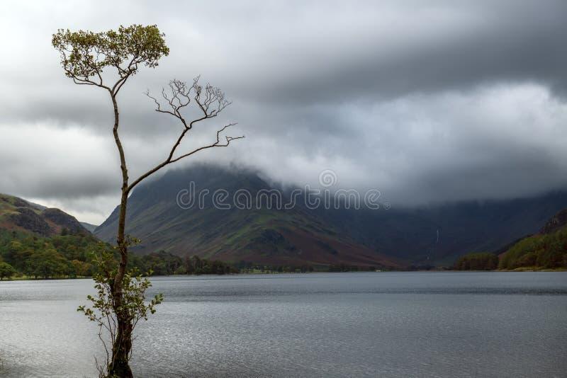 Buttermere孤立树在恶劣天气期间的 免版税库存照片