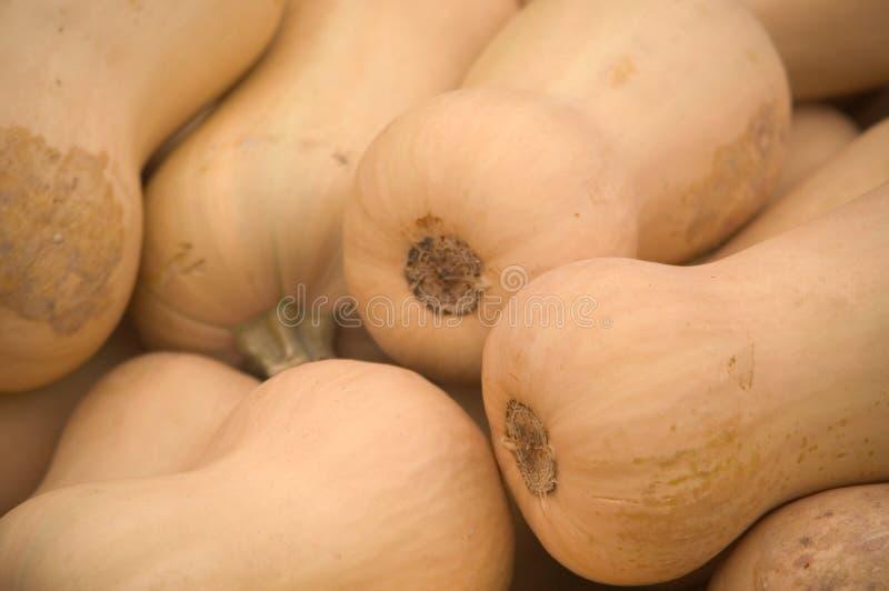butternut κολοκύνθη στοκ εικόνα με δικαίωμα ελεύθερης χρήσης
