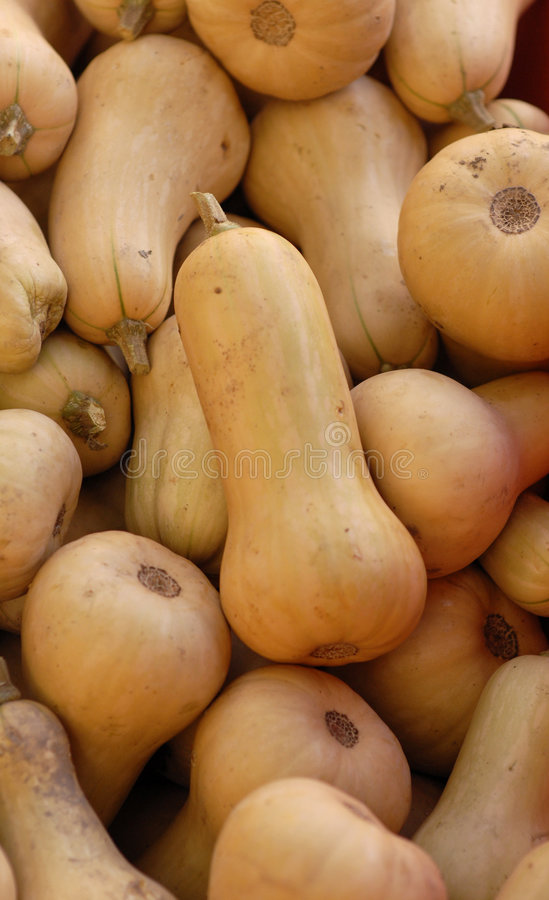 Download Butternut Squash stock image. Image of round, vegetables - 9033229