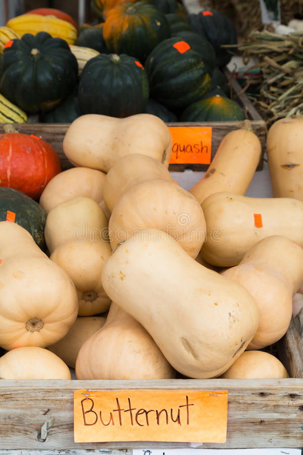 Butternut Squash. On display at a market stock image