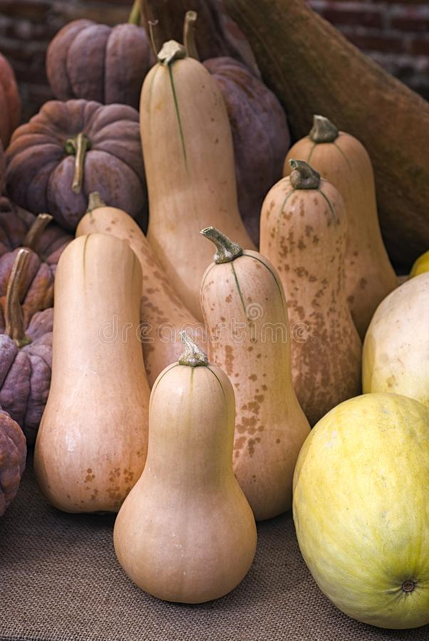 Butternut squash. With leaves and basket stock photos