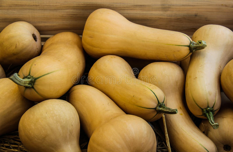 Butternut squash. For making food stock image