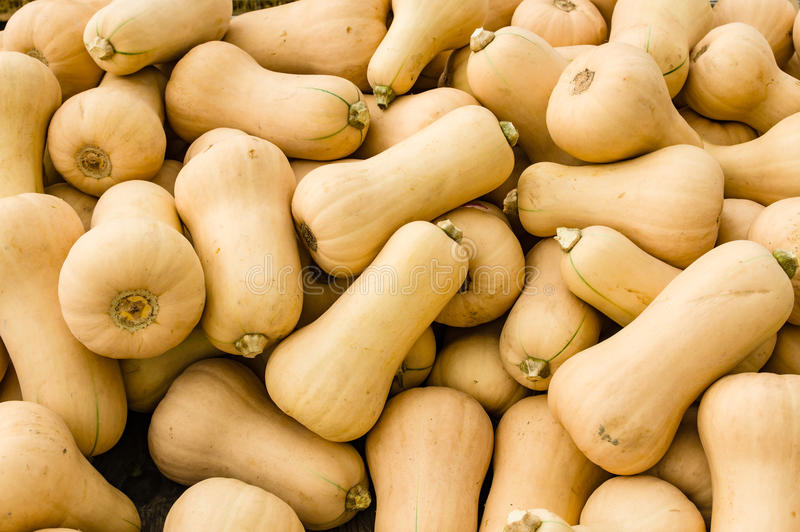 Butternut squash at the market. Butternut winter squash at the farmers market royalty free stock photos