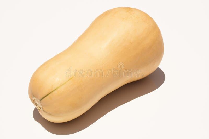 Butternut squash stock photos
