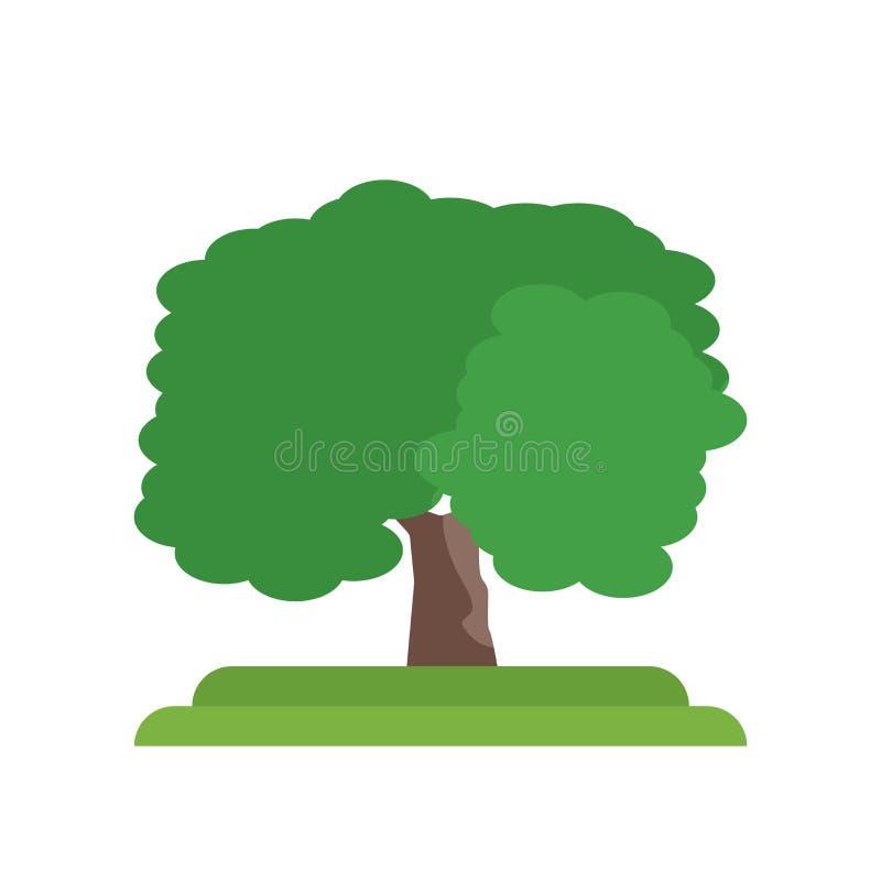 Butternutbaum-Ikonenvektorzeichen und -symbol lokalisiert auf weißem BAC lizenzfreie abbildung