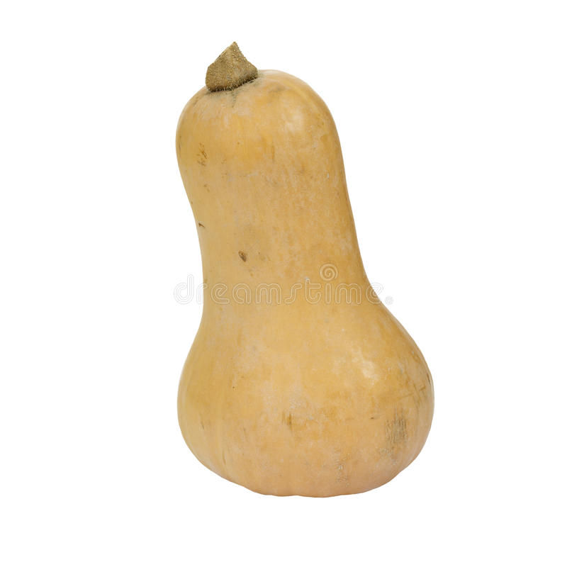 Butternutsquash. royaltyfri fotografi
