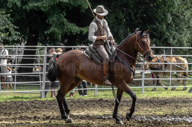 Buttero on horseback during a public event stock photo