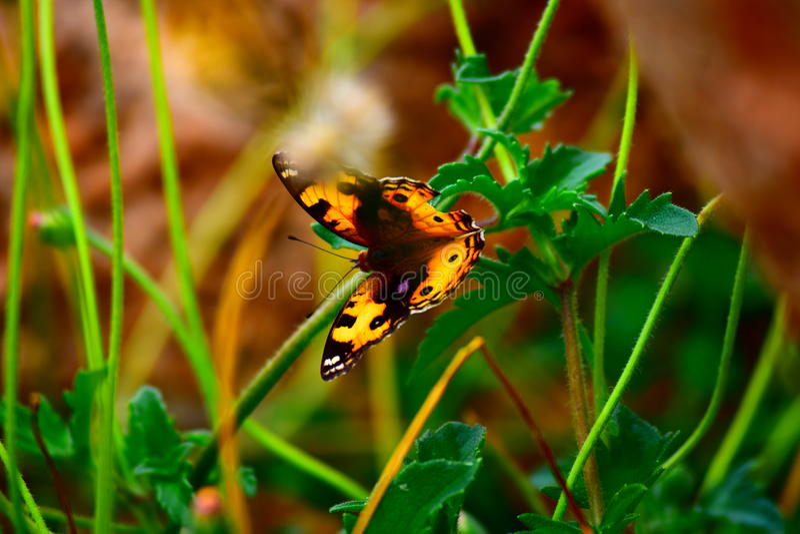 Buttetfly fotografia stock libera da diritti