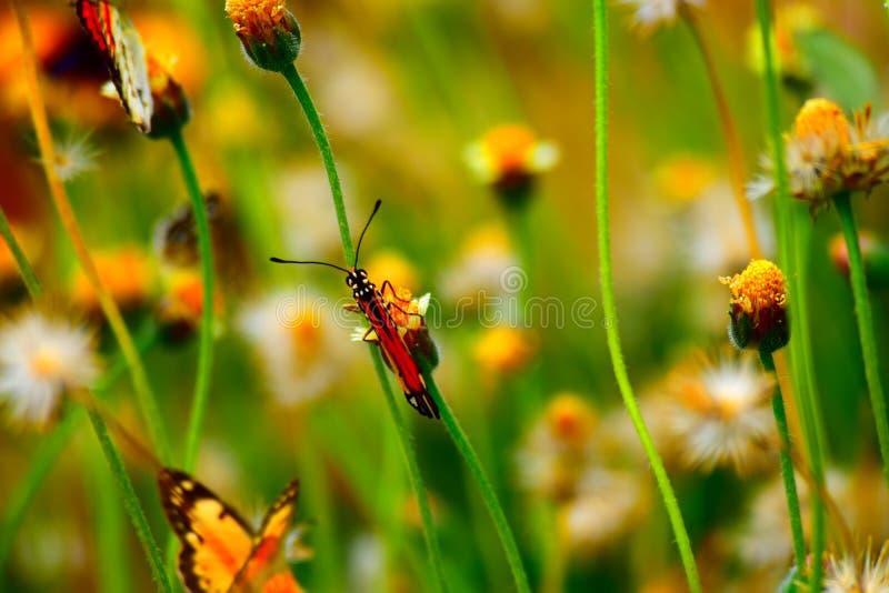 Buttetfly fotografie stock libere da diritti
