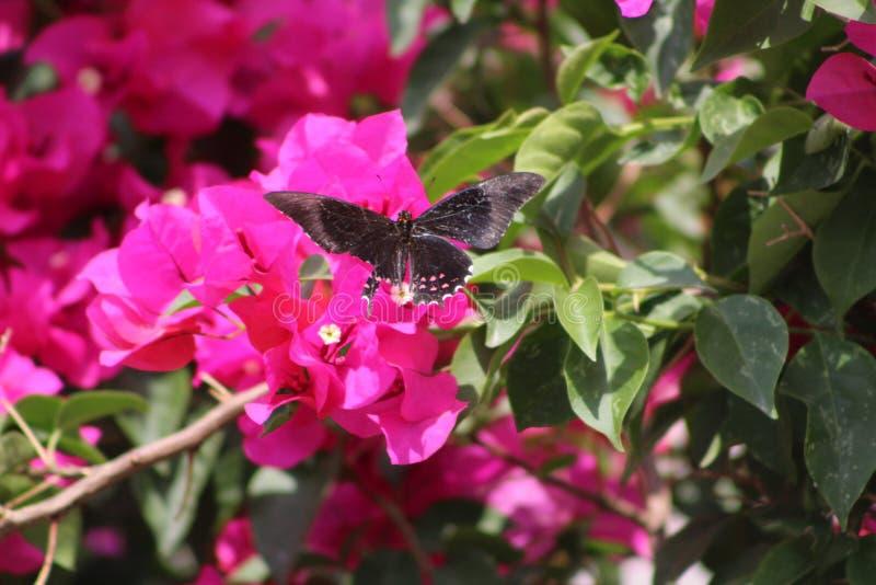 Buttherfly flyg in runt om träden arkivbilder