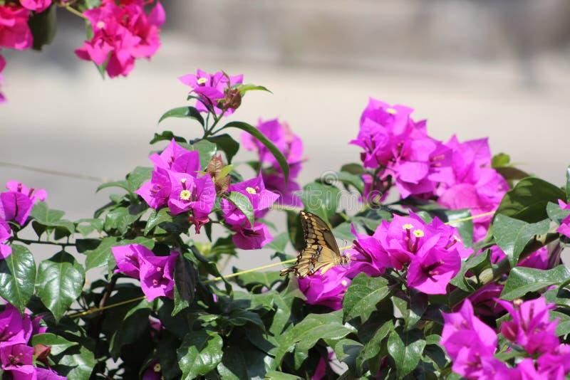 Buttherfly flyg in runt om träden arkivfoton