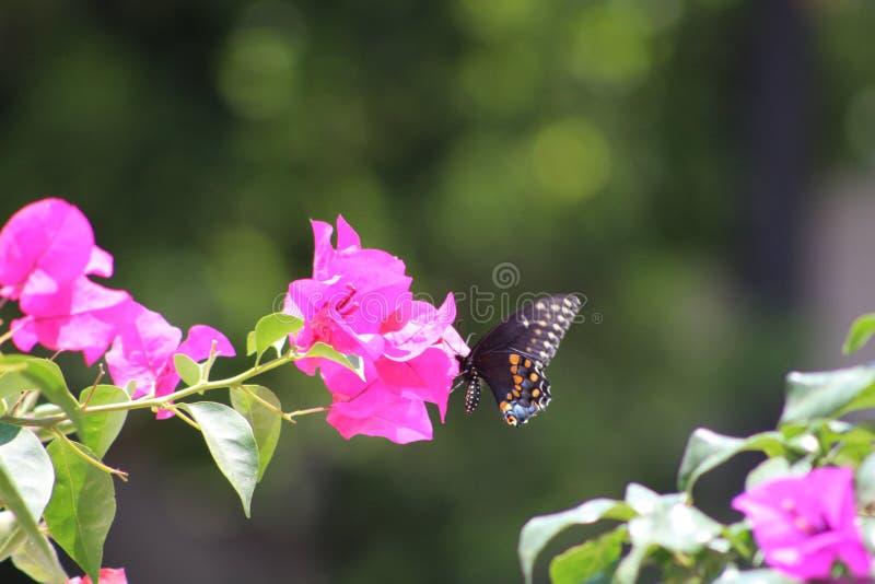 Buttherfly flyg in runt om träden royaltyfria foton