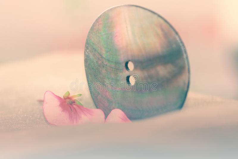Button and pink petals. Still life royalty free stock images