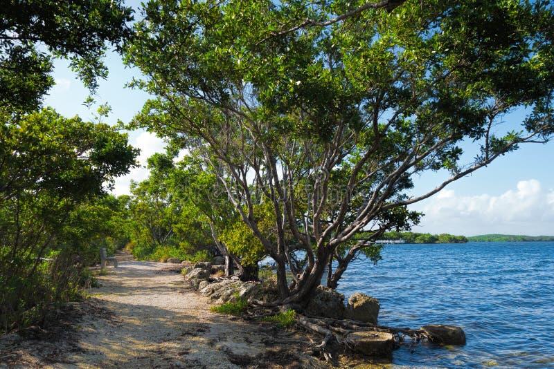 Buttonwood w Biscayne parku narodowym zdjęcia stock