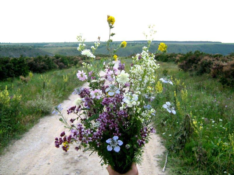 Butuceni-Blume stockbild