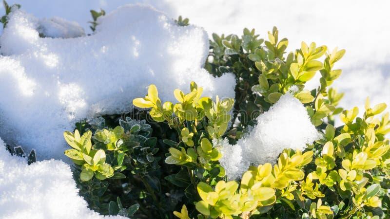 Buxo - no inverno com neve imagens de stock
