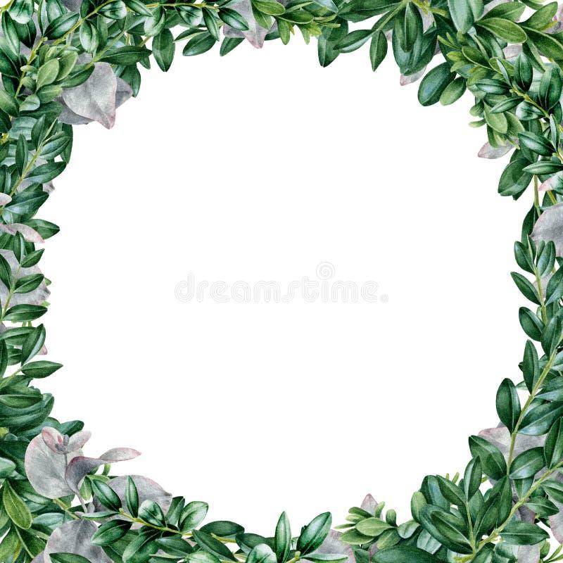 Buxus- en eucalyptusframe (waterkleurillustratie) Hand-getrokken boxwood ontwerp van groene bladeren en eucalyptustakken, perfect vector illustratie
