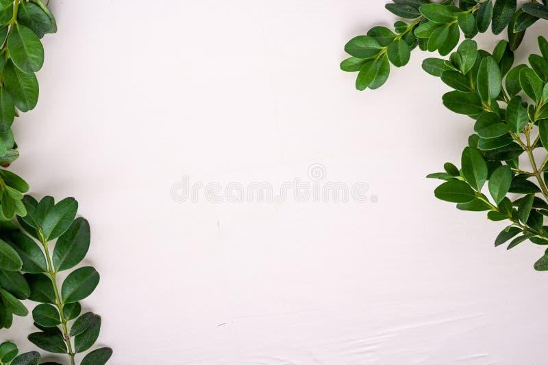 Buxus sempervirens Rahmengrenzgrünblatt verlässt Niederlassungen weiße hölzerne Hintergrundkopien-Raumschablone Draufsicht oben b stockfotografie