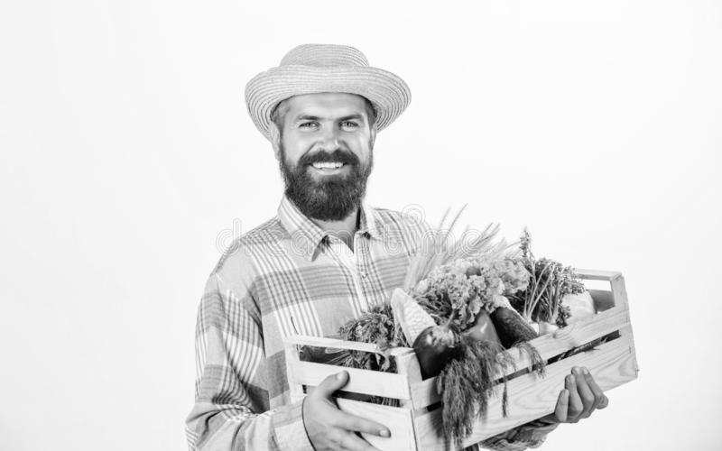 Buy local foods. Farmer rustic bearded man hold wooden box with homegrown vegetables white background. Farmer guy carry. Harvest. Locally grown foods. Farmer royalty free stock photos