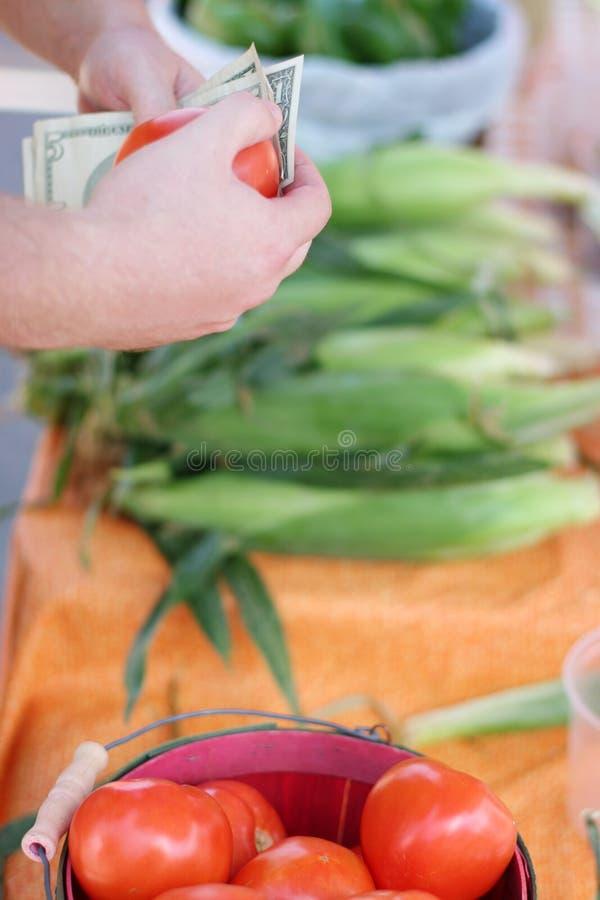 Buying tomato stock image