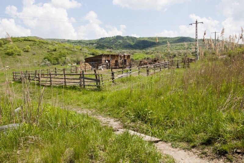 Buzau - Roemenië - de Zomertijd in de kant van het land royalty-vrije stock foto