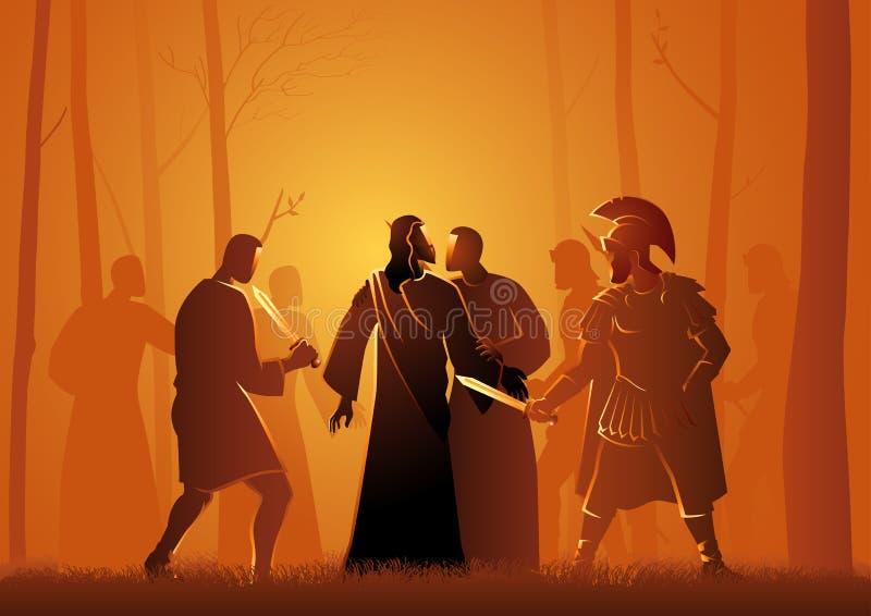 Buziak Judaszowy ilustracja wektor