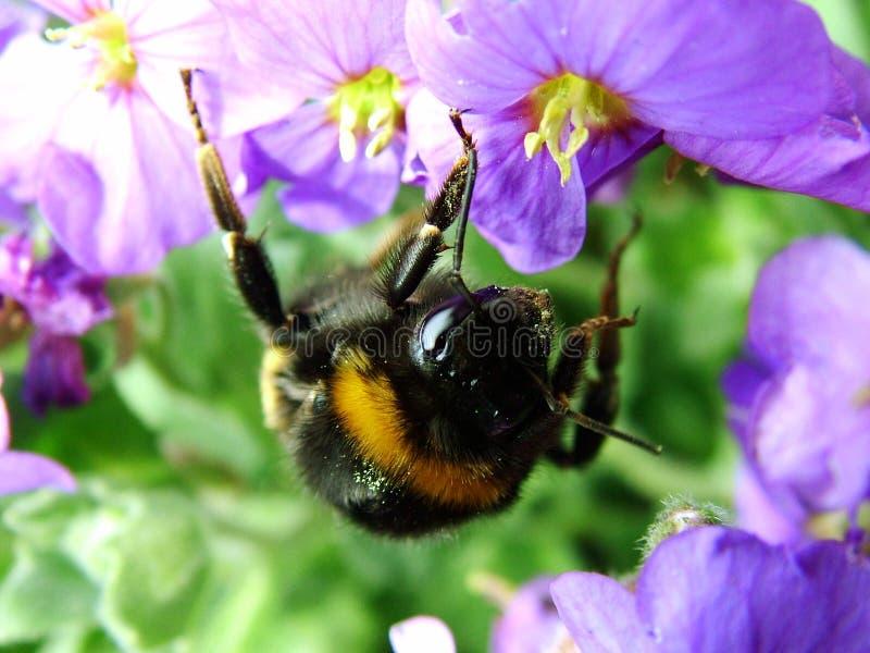 Download Buzzzzzz στοκ εικόνα. εικόνα από μύγα, πιάσιμο, bumble - 108507